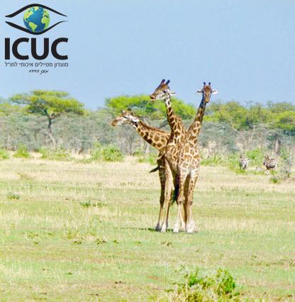 ICUC_416