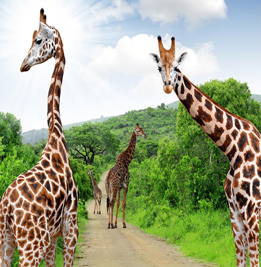 ספארי חלומי ואקזוטי בדרום אפריקה!