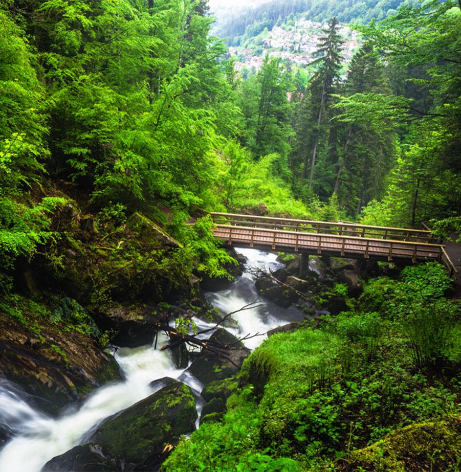 מאורגן רומנטי ליער השחור ועמק הריין