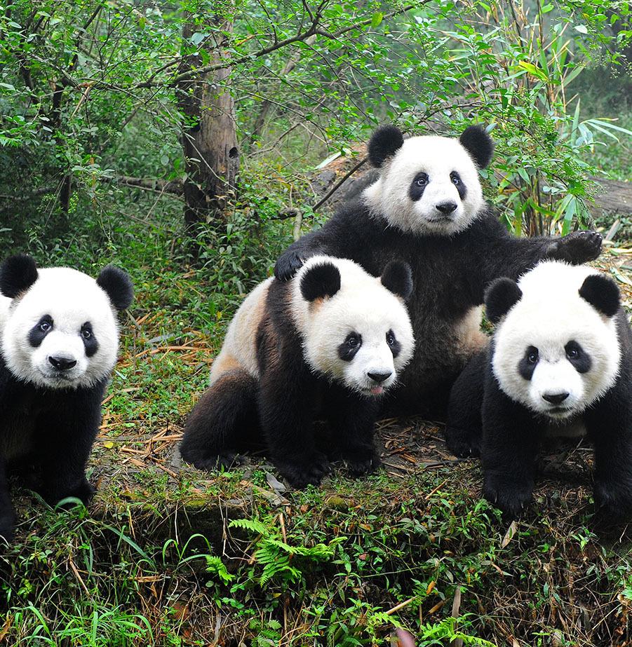 טיול פארקים למשפחות בסין ביולי-אוגוסט!