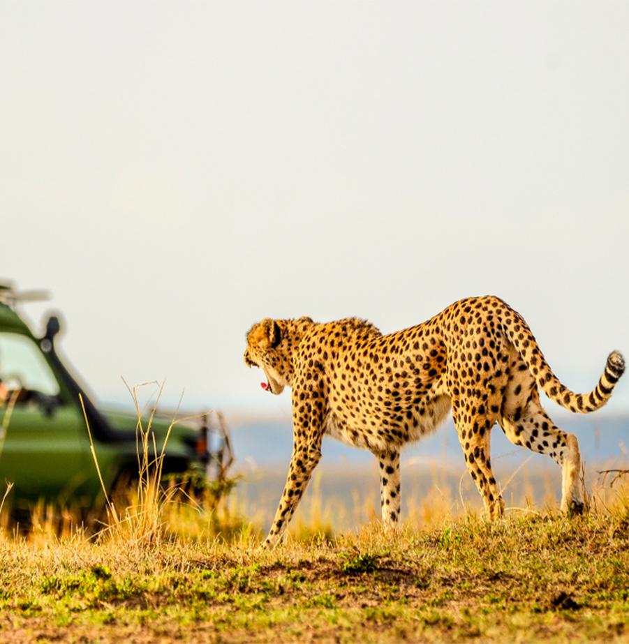 ספארי חלומי בדרום אפריקה - גם בפסח!
