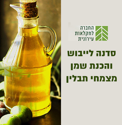 Olive416x426
